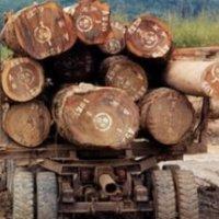 澳洲酸枝 红木家具澳洲酸枝木原木出口招代理