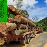 澳大利亚铁木 铁力木红橡木 红铁木招代理商