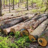 金威木业 进口木材 白橡木 原木 橡木 实木 德国橡木原材料