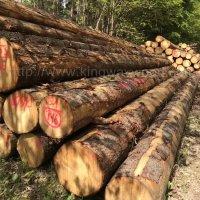 德国金威木业欧洲云杉 原木 实木 杉木 家具木料 原材料木材