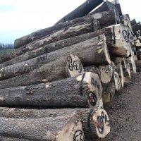 金威木业 进口材 欧洲白腊 白蜡木 原木 实木 蜡木塞尔维亚