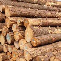 金威木业 进口材 云杉 杉木 原木 实木 欧洲云杉 ABC级