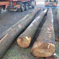 金威木业欧洲白蜡木 水曲柳 白腊 实木 蜡木 原木锯切ABC