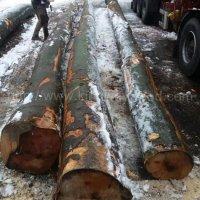 金威木业 原木 欧洲榉木 水青冈 山毛榉 榉木 木材 AB级